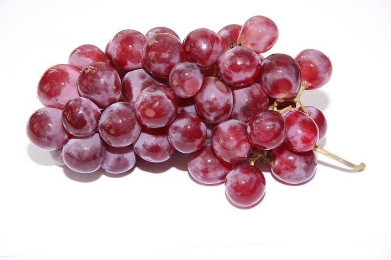 Dornfelder menej známa odroda viniča hroznorodého.